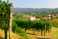Dobrovo Castle amongst Brda vineyards