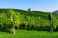 Stunning Vineyards - Zlati Gric